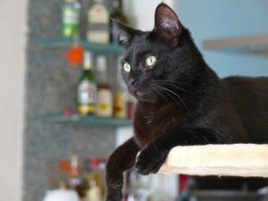 Macskabútor, kaparófa kedvező áron