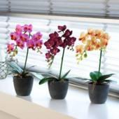 különleges szobanövények